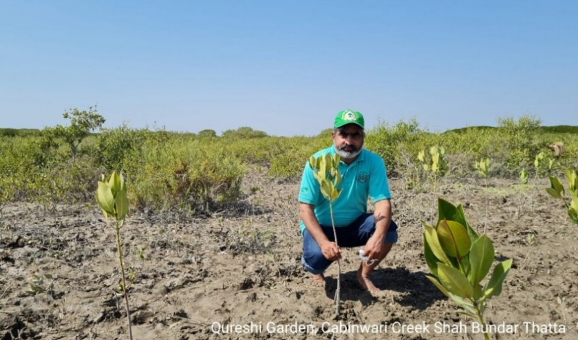 Pakistan restores mangroves for economy and ecosystem benefits